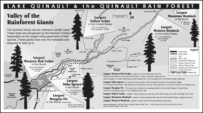 Quinault Rain Forest Valley Of The Giants